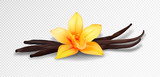 Fototapeta Kwiaty - Realistic vanilla flower and pods, vector isolated objects on transparent background