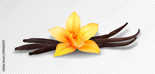 Fotografía  Realistic vanilla flower and pods, vector isolated objects on transparent backgr