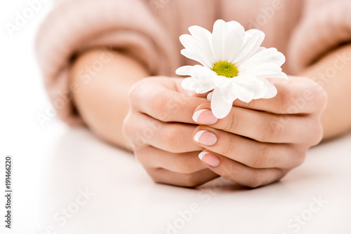 Wall Murals Pedicure cropped view of woman with natural manicure holding daisy, isolated on white