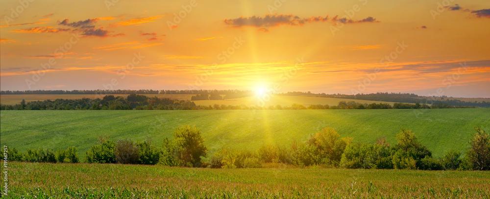 Fototapety, obrazy: corn field and sunrise on blue sky