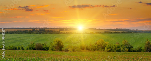 corn field and sunrise on blue sky Fotobehang