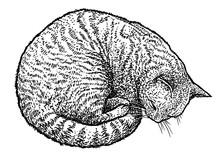 Sleeping Cat Illustration, Dra...