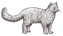 Standing Cat Illustration, Drawing, Engraving, Ink, Line Art, Vector