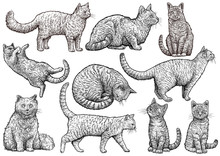 Cat Collection Illustration, D...