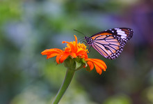 Butterfly And Flower In The Nature
