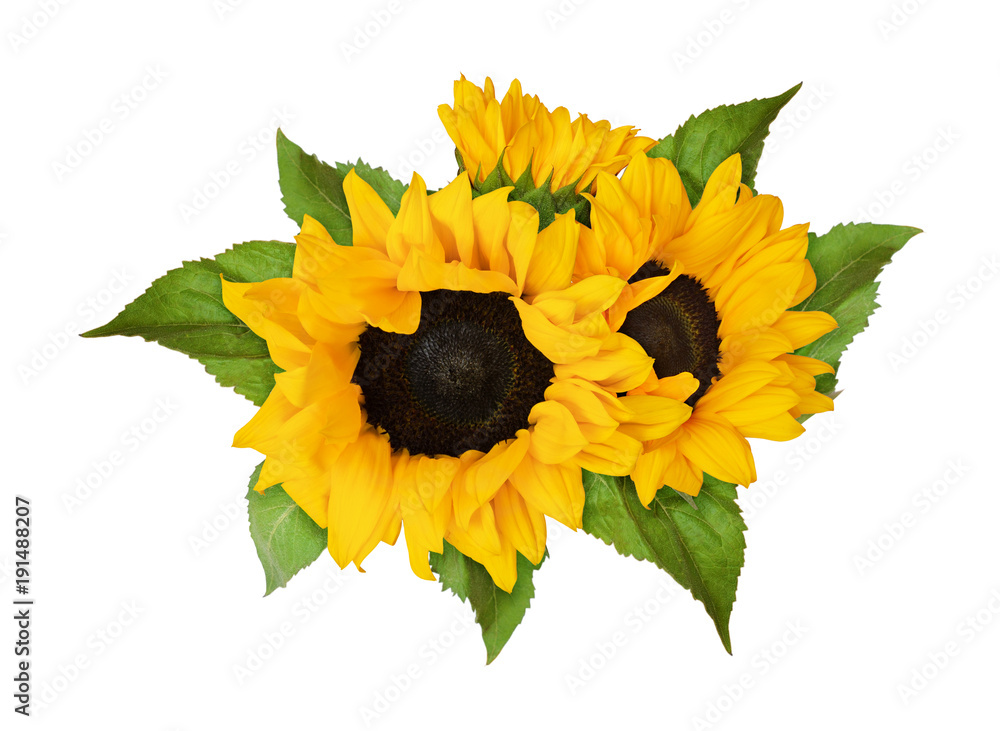 Yellow sunflowers and green leaves in summer arrangement