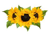 Three Yellow Sunflowers And Gr...
