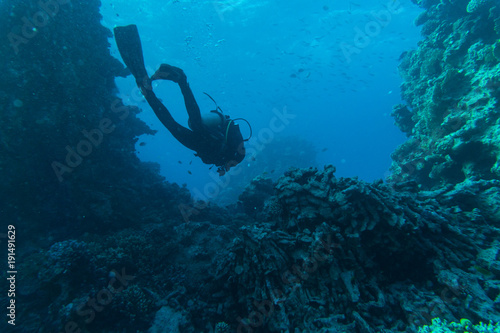 Scuba Diver, Tropical Fish and Coral Reef on sea underwater Wallpaper Mural