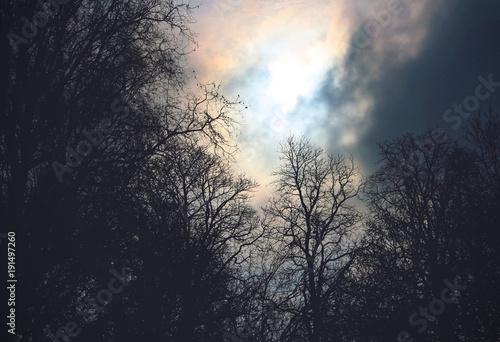 Fotomural gloomy forest