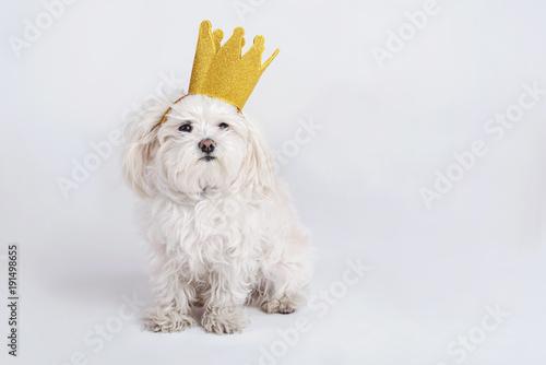 perro gracioso con corona Wallpaper Mural
