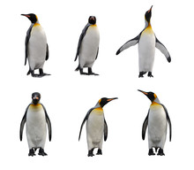King Penguin Set Isolated On W...