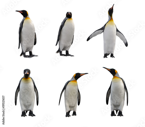 Tuinposter Pinguin King penguin set isolated on white