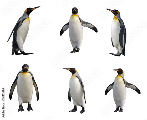 Photo sur Toile Pingouin King penguin set isolated on white