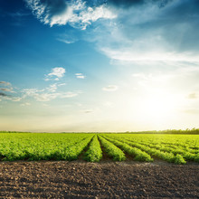 Green Agriculture Fields And Sunset In Blue Sky With Clouds