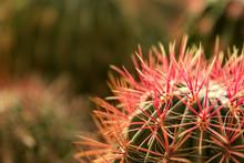 The Cactus Mountain Peak