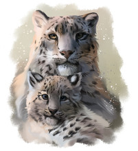 Two Snow Leopards Watercolor I...