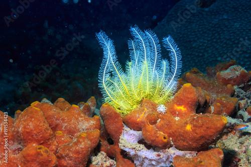 Plakat Rośliny morskie raf koralowych na Filipinach.