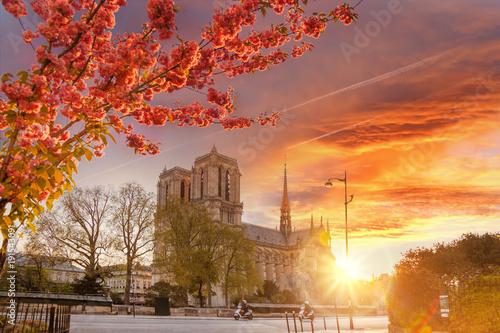 paryz-katedra-notre-dame-z-rozkwitl-treeagainst-kolorowe-sunrise-we-francji