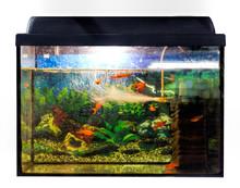 Beautiful Decorative Aquarium
