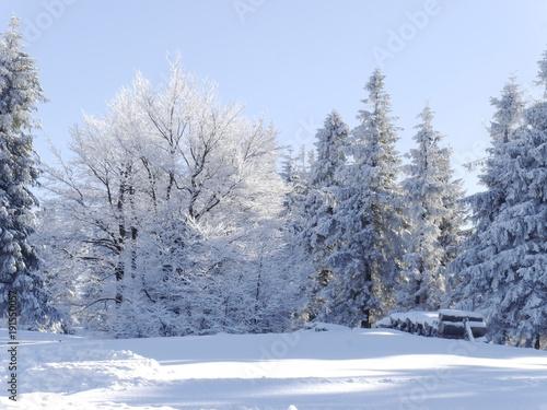 Poster Fleur zimowy piękny dzień. krajobraz w Beskidach