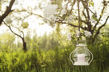Apple Tree Blossom Garden With Candlestick