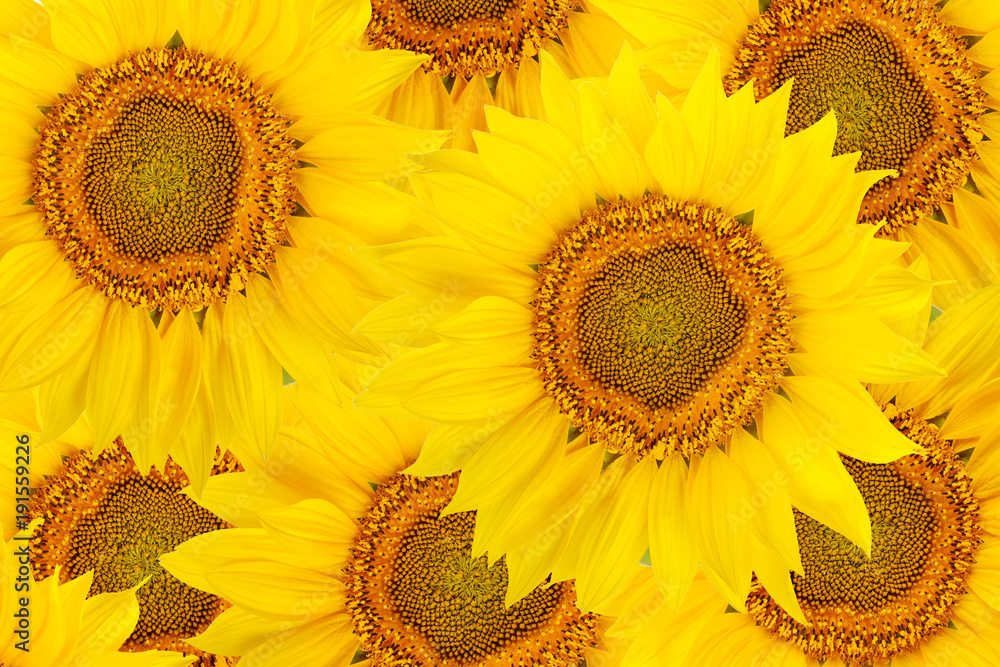 Top view of sunflower flowers.