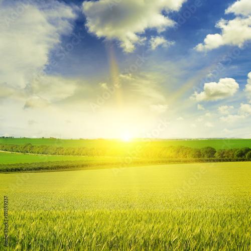Fotobehang Cultuur Beautiful sunset on wheat field