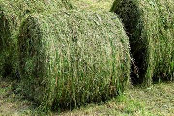 緑の牧草ロール
