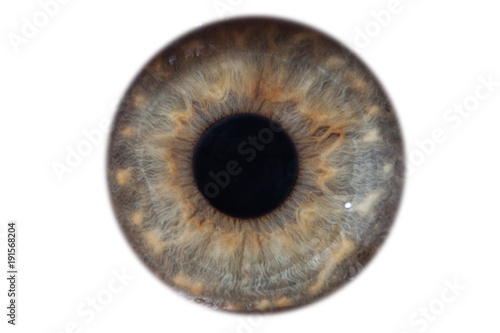 Aluminium Prints Iris Closeup macro iris of female green eye isolated