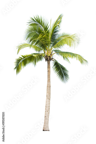 Cadres-photo bureau Palmier Coconut tree on white background