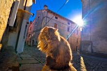 Cat On Sun Rays On Street Of Groznjan Village