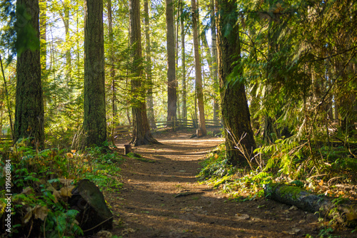 Fotografía  Sunrays filtering thru the forest foliage in a Vancouver Island provincial park