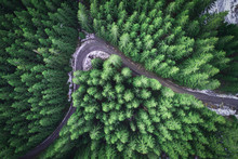 Empty Road In A Forest From A ...