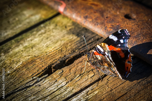 Printed kitchen splashbacks Butterflies in Grunge Indian red admiral butterfly on a wooden background close up. Copy space