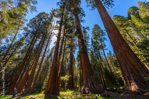 Keuken foto achterwand Verenigde Staten People walking on the Big Trees Trail in Sequoia National Park where are the biggest trees of the world, California. USA.