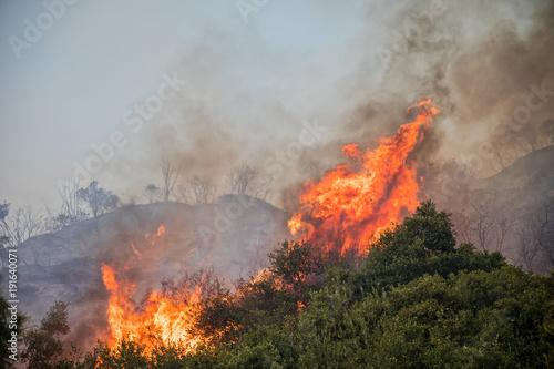 Photo fire in a pine forest in Kassandra, Chalkidiki, Greece