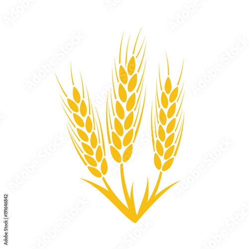 Vászonkép Agriculture wheat Logo Template. Vector illustration
