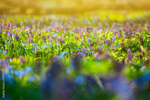 Garden Poster Spring beautiful spring forest glade in a forest