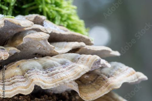 Vászonkép Polypore on a tree trunk. Forest macro photography.