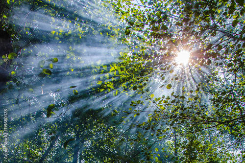 Foto  Wonderful sun rays penetrating among the branches and leaves of the broadleaf tr