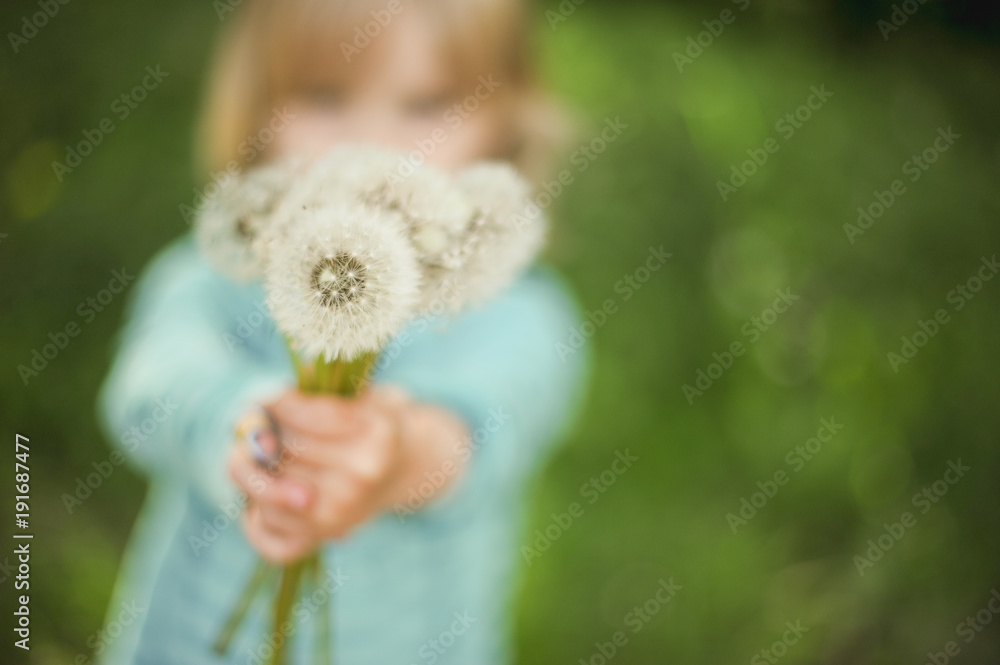 Fototapety, obrazy: Little girl holding dandelions bouquet with shallow depth of field. Summer, happiness, allergy concepts.