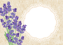 Lavender. Background With Lave...