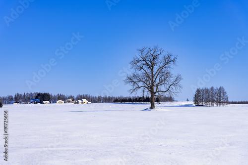 北の大地の雪景色 Fototapet
