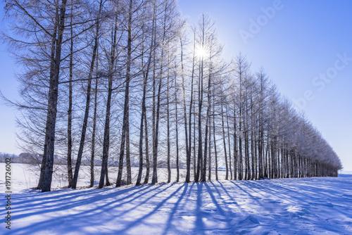 Obraz na plátně  北の大地の雪景色