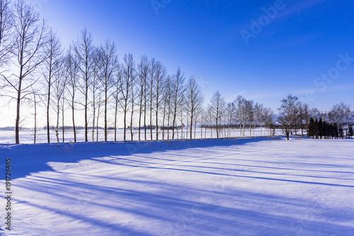 Fotografie, Obraz  十勝平野の雪景色