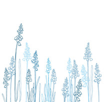 Muscari - Spring Flowers With ...