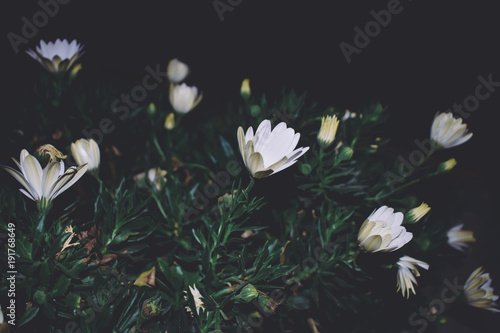 Photo  Plantas