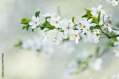 Fotografie, Tablou  Spring tree blossom