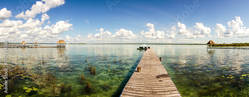 Wall Murals Water lilies Bacalar lagoon in the Yucatan, Mexico.