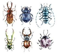 Watercolor Beetles Collection On A White Background. Animal, Insects. Entomology. Wildlife. Can Be Printed On T-shirts, Bags, Posters, Invitations, Cards, Phone Cases, Pillows.